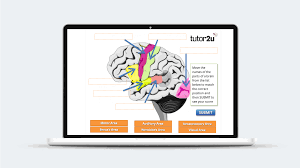 videos tutor2u psychology