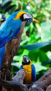 20 best pássaros images on pinterest birds paintings and models