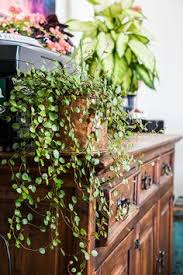 Great Indoor Trees Hgtv unusual houseplants to try houseplant houseplants and hgtv