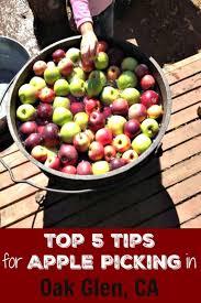 5 tips for apple picking in oak glen california socal field trips