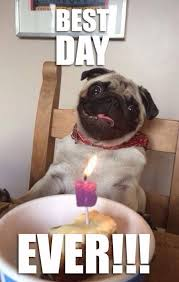 Best Day Ever Meme - 50 funny pug memes best funny pug pictures