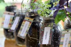 inside herb garden how to grow herbs indoors using mason jars hgtv