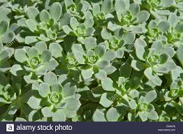 there are several succulents plants species that come from the dry