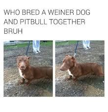 Weiner Dog Meme - 25 best memes about weiner dog weiner dog memes