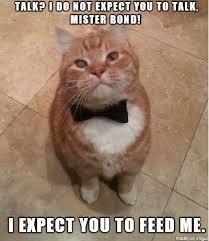 Pussy Meme - golden pussy meme on imgur