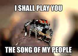 Friendly Spider Memes Image Memes - these spiders will cure your arachnophobia with their cuteness