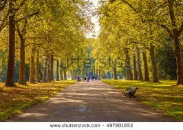 tree lined hyde park stock photo 497801653
