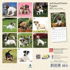 australian shepherd jack russell terrier jack russell terrier puppies mini calendar 2018 calendar club uk