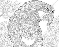 coloring macaw parrot zentangle doodle coloring