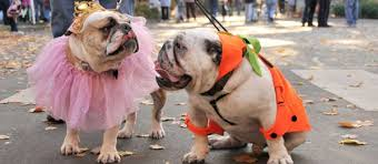 Halloween Costumes English Bulldogs Easy Diy Halloween Costumes Pets Care Community