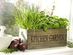 herbs planter kitchen herb garden kit windowsill window box planter with seeds