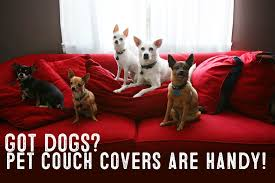 Pet Covers For Sofa by Best Pet Furniture Covers For Couches My First Shiba Inu
