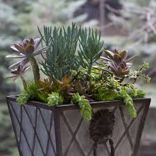 garden ideas bombay outdoors