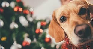 dog christmas 13 adorable christmas sweaters for your dog