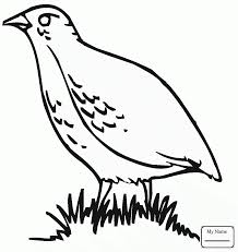 coloring pages for kids birds grey francolin colorpages7 com