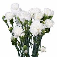 wholesale flowers miami buy carnations online wholesale flowers miami miami flower market