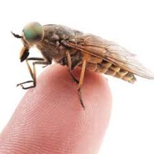 How Can I Kill Bed Bugs Bedbugs Facts Removal And Prevention
