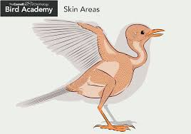 all about bird anatomy bird academy u2022 the cornell lab