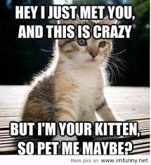 Funny Kitten Memes - little funny kitten call me