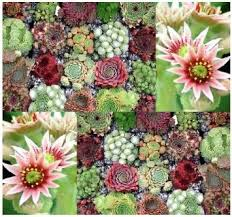 amazon succulents 149 best succulents images on pinterest succulent plants php