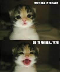 Cute Kitten Memes - cute kitten happy face meow aum