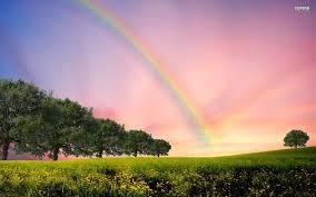 rainbow trees u0026 flowerfield wallpapers rainbow trees