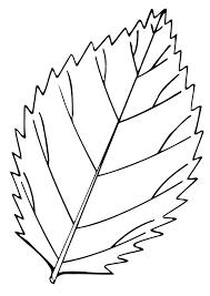 coloring page leaf eliolera com