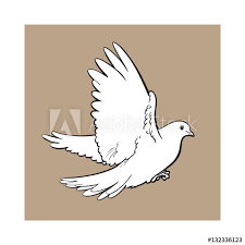 free flying white dove sketch style vector illustration isolated