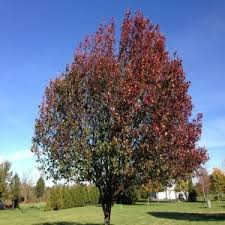 advanced trees start your landscaping project with nursery trees