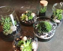 make a terrarium class