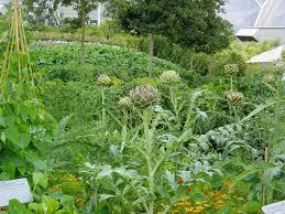 diy vegetable garden amaze vege garden