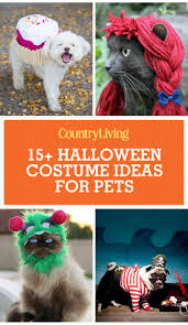Halloween T Shirts For Dogs by 25 Cute Dog And Cat Halloween Costumes Best Ideas For Pet