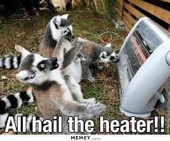 Lemur Meme - lemur memes funny lemur pictures memey com