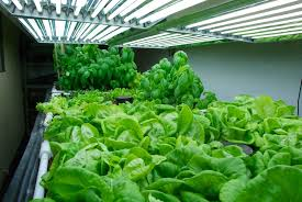 Grow Lights For Indoor Herb Garden - indoor vegetable gardening lighting home outdoor decoration