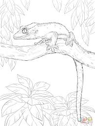 crested gecko on a tree coloring page free printable coloring pages