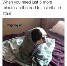 Dog In Bed Meme - dog wrapped in towel on bed justpost virtually entertaining