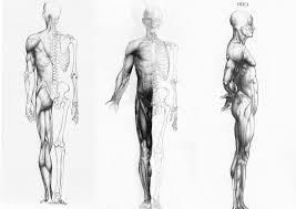 Anatomy In Medicine Choice Image Learn Human Anatomy Image