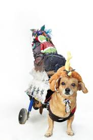 Halloween Costume Animal by 125 Best Pets In Halloween Costumes Images On Pinterest Animals