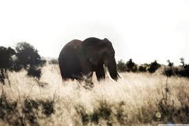 apple wallpaper elephant elephant re edited 4k hd desktop wallpaper for 4k ultra hd tv