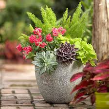 Container Gardening Ideas Top 10 Container Gardens For Your Patio Rojabonita