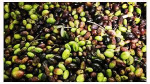 Element B Washington State U0027s by Oliveraie Jeanjean U2013 Visit An Organic Olive Orchard My Secret South