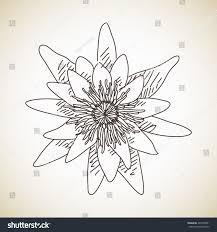 sketch flower lotus hand drawn vector stock vector 264703391