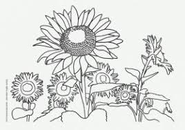 Nature Coloring Pages For Kids 291026 Photosynthesis Coloring Page Photosynthesis Coloring Page