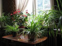 amazing of hydroponic indoor plants buy hydroponic plants large