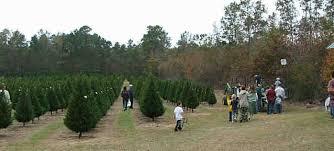 grant christmas grant christmas tree farm