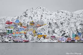 Do Newfoundlands Shed Year Round by The Old Battery Newfoundland Canada After A Snowfall