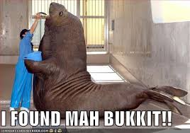Walrus Meme - the complete walrus bucket saga 113 flashbacks i haz a buckit