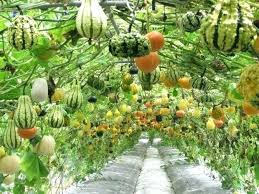 Design A Vegetable Garden Layout Small Vegetable Garden Layout Container Vegetable Gardens