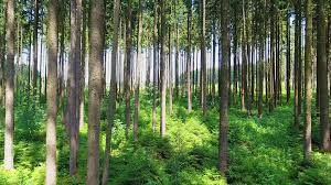 deep forest green pristine forest green trees rocks aerial backward motion sunny day