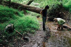 you can find dinosaurs in your backyard u2013 experiment u2013 medium